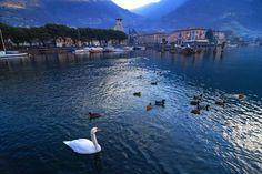 Visit Lake Iseo Swans in harbour on Lake Iseo