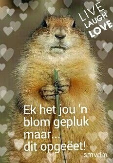 N blom vir jou. Live Laugh Love, Afrikaans, Greeting Cards, Sayings, Words, Quotes, Gift Ideas, Quotations, Lyrics