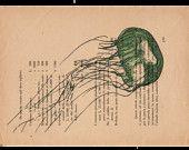 Pag. 93 Medusa, colore polvere verde