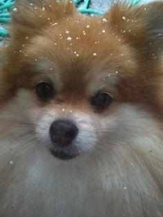 Snow on Fox