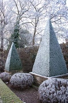 Frosty Topiary