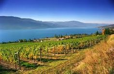 Gray Monk Winery, overlooking Okanagan Lake, BC #Kelowna #wine
