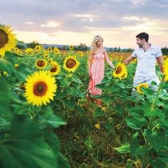 A sunshiny engagement session in a sunflower field.
