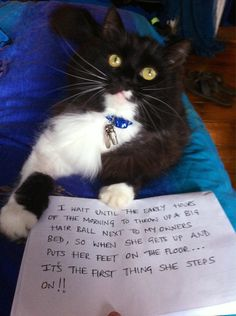 Thought I'd get in on this new animal shaming action.. - the truth!