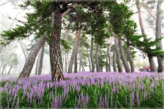소나무 Fresh Flowers, Wild Flowers, Outdoor Art, Animal Design, Celebrity Weddings, Art Education, Trees To Plant, Spring Time, Beautiful Places