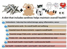Sardines for Dogs and Cats - Real Food for Good Health because Good Food IS preventative medicine!  Fresh-frozen sardines are an inexpensive, simple, convenient, healthy whole food for dogs and cats.    It's time to ditch toxic, health deteriorating highly processed dog and cat food treats for real food...