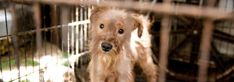 Require emergency plans to protect animals during disasters - Doris Day Animal League Animal Welfare Act, Disaster Plan, Contingency Plan, Animal League, Animal Protection, Disaster Preparedness, Puppy Mills, Environmental Issues, Dory