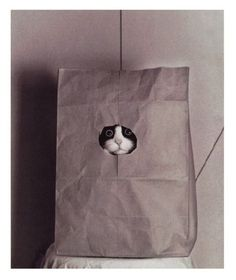/ cats, kitten, anim, big eyes, paper bags, funni, tuxedo cat, kitti, kitty