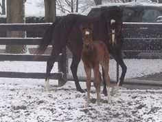 Rachel Alexandra and her colt by Curlin! They are having a naming contest for the colt... enter here www.stonestreetfa...