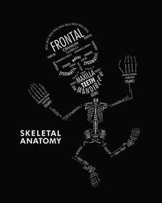 Skelatal anatomy