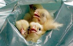12 Egg Facts the Industry Doesn't Want You to Know