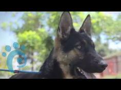 Видео-объявления питомцев приюта для домашних животных (Rescue Cam)
