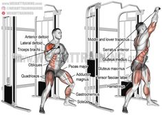 Twisting cable overhead press. A unilateral compound exercise. Target muscle: Anterior Deltoid. Synergists: Lateral Deltoid, Upper Pectoralis Major, Supraspinatus, Triceps Brachii, Middle and Lower Trapezius, Serratus Anterior, Gluteus Maximus, Adductor Magnus, Quadriceps, Soleus, Obliques, Psoas major, Quadratus Lumborum, Iliocastalis Lumborum, Iliocastalis Thoracis, Tensor Fasciae Latae, and Gluteus Medius. Dynamic stabilizers: Triceps Brachii (long head only), Hamstrings, and…