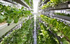 Urban Agriculture – A Next Big Thing for Cities - International Conference on Vertical Farming and Urban Agriculture being held today and tomorrow at Nottingham University.