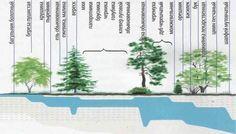 Hľadanie vody pomocou rastlín indikátorov   OZ Biosféra
