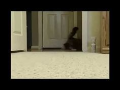 Cat get Scared Smile, Cats, Videos, Youtube, Fun, Gatos, Smiling Faces, Kitty, Cat