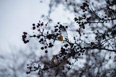 Fruit bearing tree