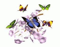 Gifs+Animados+Mariposas+32.gif (320×256)