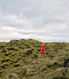 """@misterweekender """"The moss covered lava fields surrounding the Ring Road in Iceland is a playground for nature lovers. And this is where I run wild and free."""" #willjourney #iceland #naturefroth by will_journey"""