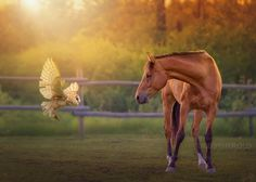 """Whoo are you? - © Debby Herold, Calgary, AB www.debbyherold.com  Featured in <a href=""""https://iso.500px.com/equine-ecstasy-30-most-popular-horse-photos-on-500px/?utm_source=500px&utm_medium=social&utm_campaign=sep14_730AM_equine-ecstasy-30-most-popular-horse-photos-on-500px"""">Equine Ecstasy: 30 Most Popular Horse Photos on 500px</a>  Owl composite by Captured by Carrie Photography.  If you see this photo on the net labeled """"flying owl and horse by hdbestwalls1"""" you are viewing a stole..."""