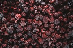 Raspberries © Rowan Tree Photography | www.rowantree.se