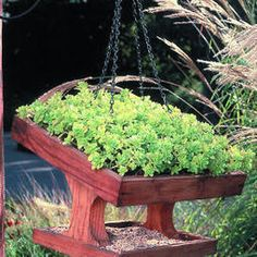 With ground covers on the roof, these easy-to-make feeders shelter the seed naturally.   One mud flat equals one bird-feeder roof: That's the formula for the canopy on these easy-to-construct bird feeders. Sturdy ground covers, such as moss, ivy, thyme, and small sedums, will grow in the shallow ...