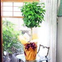 Image result for Gift Plants Online