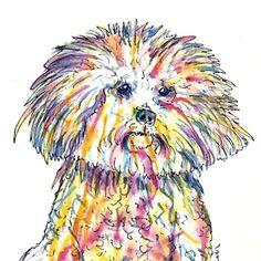 Rainbow colored Bijon Frise!   Colorful 5 x 7 fine artprint from my watercolor…