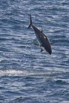 Ocean Fish Populations Cut In Half Since The 1970s: Report