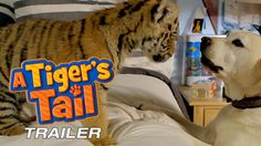 Watch a Tiger's Tail for a fun Weekend Family Afternoon :)