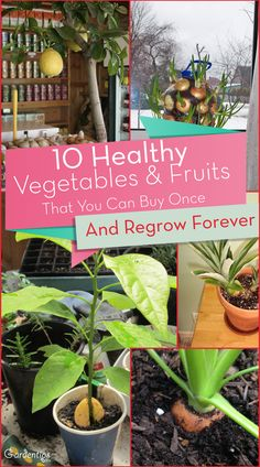 We have for you good news! Did you know that there are a lot of different fruits and vegetables you can regrow yourself? Now you can reduce waste and save your money and grow healthy food. All you …