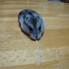 Hamster Dot Eat
