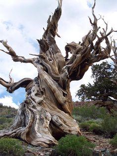 Dead Wood 86
