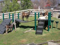 Goat Playground | Down On The