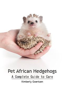 For those interested in hedgies as pets I highly recommend reading this free PDF. It's compiled from many hedgehog owners and breeders on the hedgehog central site. I used it as a guide for picking cat foods for T.