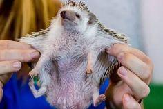 Ugly Hedgehog - Photography Forum.