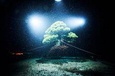 Makoto Azuma Plunges Bonsai into the Depths of the Sea