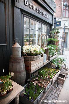Bulbs at Blomsterskuret in Copenhagen - the most beautiful flower shop in town!