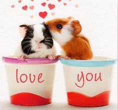 Valentine Piggies!! <3