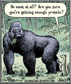 """NO MEAT AT ALL? ARE YOU SURE YOU'RE GETTING ENOUGH PROTEIN? From hair dressers to lawyers, dietitians and doctors, when I admit to being a vegan, the standard response is a furrowed brow, concerned eye contact and the question """"What do you do about protein?"""" If I'm lucky, I might even get a pat on the shoulder or a squeeze of the elbow. What is the biggest misconception since people thought the world was flat? Meat is protein and protein is meat. (Article) Vegetarian Quotes, Vegetarian Protein, Vegan Quotes, Reasons To Be Vegetarian, Diet Quotes, Vegan Soup, The Animals, Funny Animals, Strange Animals"""
