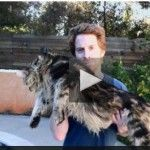 Seth Green Takes His 26lb Cat To a Pet Psychic - Pet Sitter Patrol