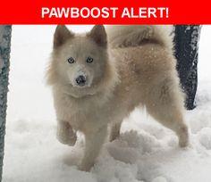 Please spread the word! Nikko was last seen in Amityville, NY 11701.    Nearest Address: Near Horseshoe Ct & Cimarron Ct