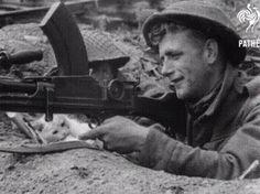 O gato da paz