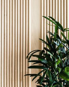 """410 Likes, 1 Comments - IVY MUSE (@ivymuse_melb) on Instagram: """"PLANT STYLING 