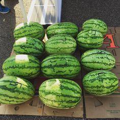 Watermelons from Mac's. Ruston, LA. Ruston Farmers Market