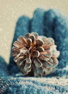 #PANDORAloves gathering pine cones in the snow.