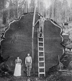 Leñadores de California, 1920. pic.twitter.com/Lh4uqxj0Tx