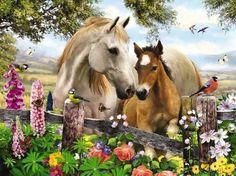 024 koně zvířata