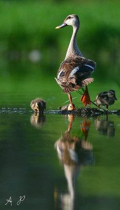 16-moments-about-animal-parenting-creative-picture-digital-photography-idea (16)