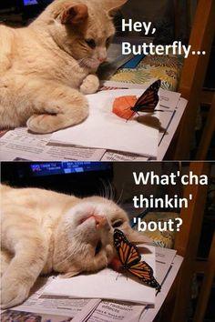 Dat cat